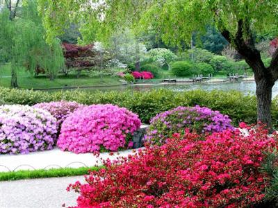 Alpine and rockery plants for Plants suitable for japanese garden